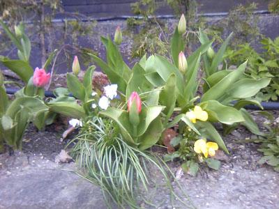 お花2010